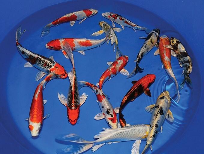 Harga Ikan Kediri Murah Dan Lengkap